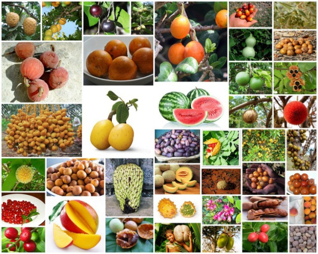african-fruits
